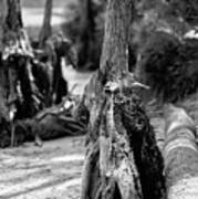 Nature Scenes Around Hunting Island South Carolina Poster