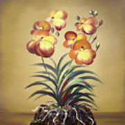 Orange Orchid Flowers Poster