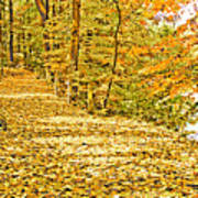 Path Through A Pennsylvania Deciduous Forest Autumn Poster