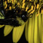 Pollen Collector 3 Poster