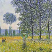 Poplars In The Sunlight Poster