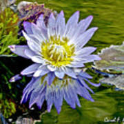 Purple Water Lily Pond Flower Wall Decor Poster