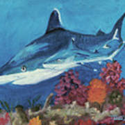 2 Reef Sharks Poster