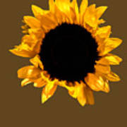 Sunflower Stretching On Brown Poster