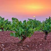 Vineyards At Pink Sunset Poster