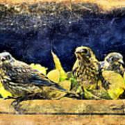 Vintage Bluebird Print Poster