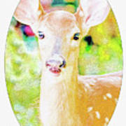 White-tailed Virginia Deer Fawn Poster