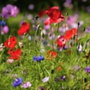 Wild Flowers And Red Poppies Poster