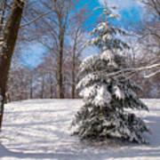 Winter Delight Poster