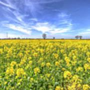Yellow Fields Of Summer Poster