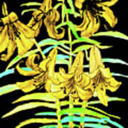Yellow Lilies, Hand Drawn Painting Poster