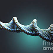 Dna Structure Poster