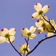 2009 Springtime  6399  Poster