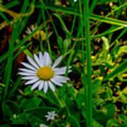 2015 08 23 01 A Flower 1106 Poster