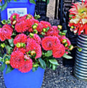 2016 Monona Farmer's Market Blue Bucket Of Dahlias Poster