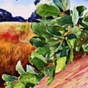 #203 Blue Oak Leaves 2 Poster
