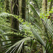 Jungle 99 Poster