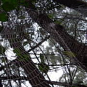 Australia - Spider Web High In The Tree Poster