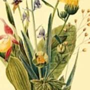 Vintage Botanical Illustration Poster