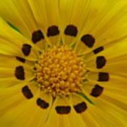 Australia - Yellow Daisy Flower Poster