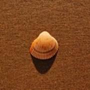 Beach Shell Poster