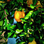 2644- Lemon Tree Poster