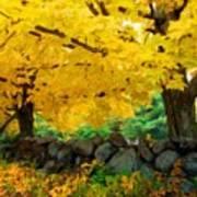 Nature Landscape Pictures Poster