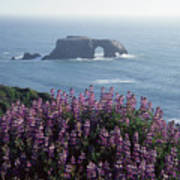 2a6101 Arched Rock And Blue Pod Lupine Ca Poster