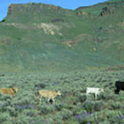 2da5946-dc Cattle On Steens Mountain Poster