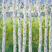 Aspen Trees Colorado Poster