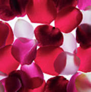 Back Lit Flower Petals 1 Poster