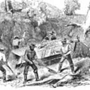 California Gold Rush, 1860 Poster