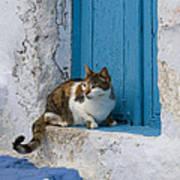 Cat In A Doorway, Greece Poster