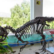Centro De Investigaciones Paleontologicas Poster