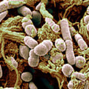 Chicken Skin Contaminated With Bacteria Poster
