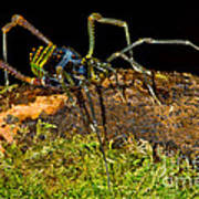 Colorful Harvestman Poster