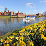 Daffodils Beside The Thames At Hampton Court London Uk Poster