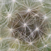 Dandelion Close-up. Poster