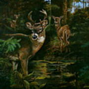 3 Deer Watching Poster
