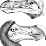 Dodo Bird, Hunted To Extinction Poster