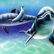 3 Dolphins Poster