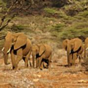 Elephant Parade Poster