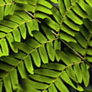 Fern Close-up Of Water Droplets  Poster