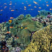 Fiji, Reef Scene Poster