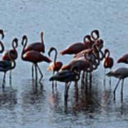 Flamingo Family Poster