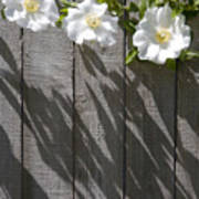 3 Flowers On The Fence Poster