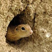 Goround Squirrel  Poster