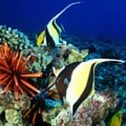 Hawaiian Reef Scene Poster