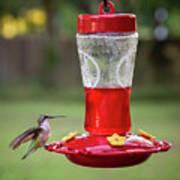 My Sweet Hummingbird Poster