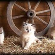 3 Little Kittens With The Wagon Wheel. Poster